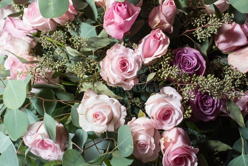 Rosa och purpurfärgade rosor arkivbild