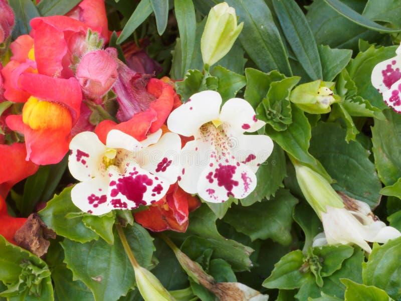 Rosa och vit orkidéblom till mjuk fokus arkivbilder