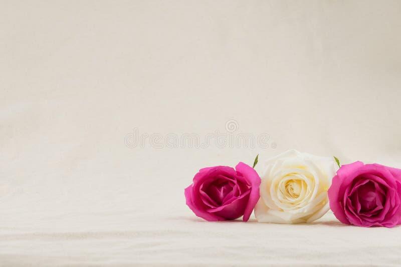 Rosa och vita rosor på vit muslin royaltyfri fotografi