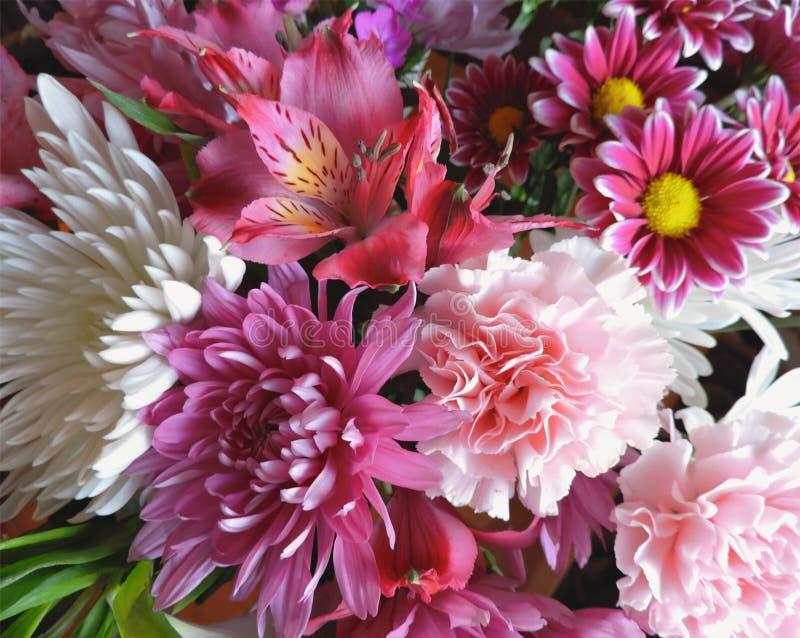 Rosa och vita vårblommor för härlig bukett royaltyfri bild
