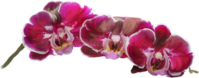 Rosa Orchideen stock abbildung