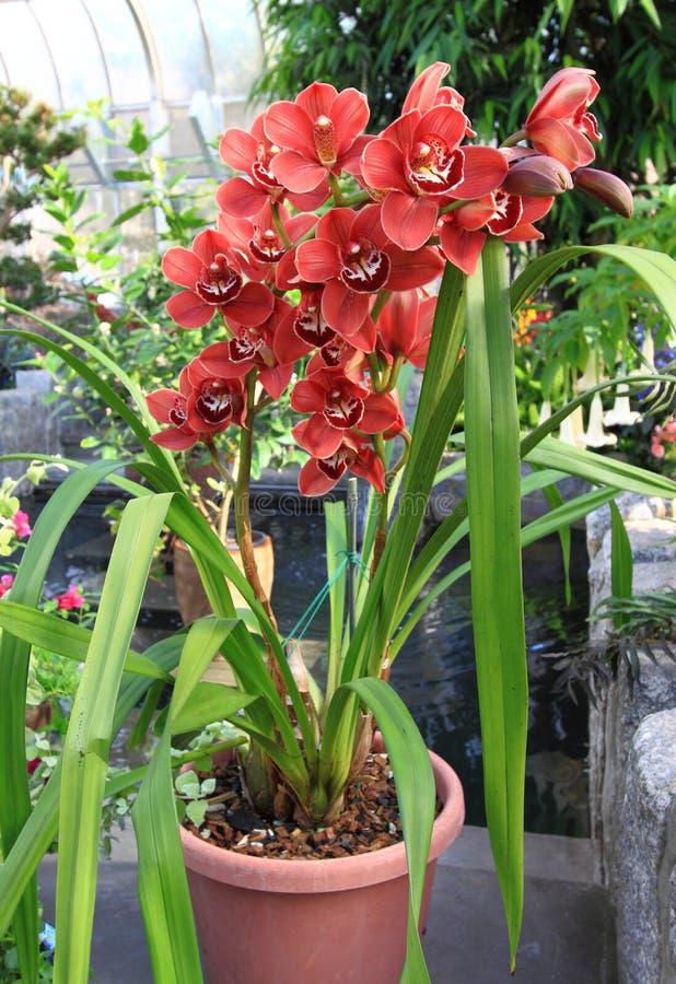 rosa orchideen topf blumen stockfoto bild von rein sch n 37127500. Black Bedroom Furniture Sets. Home Design Ideas