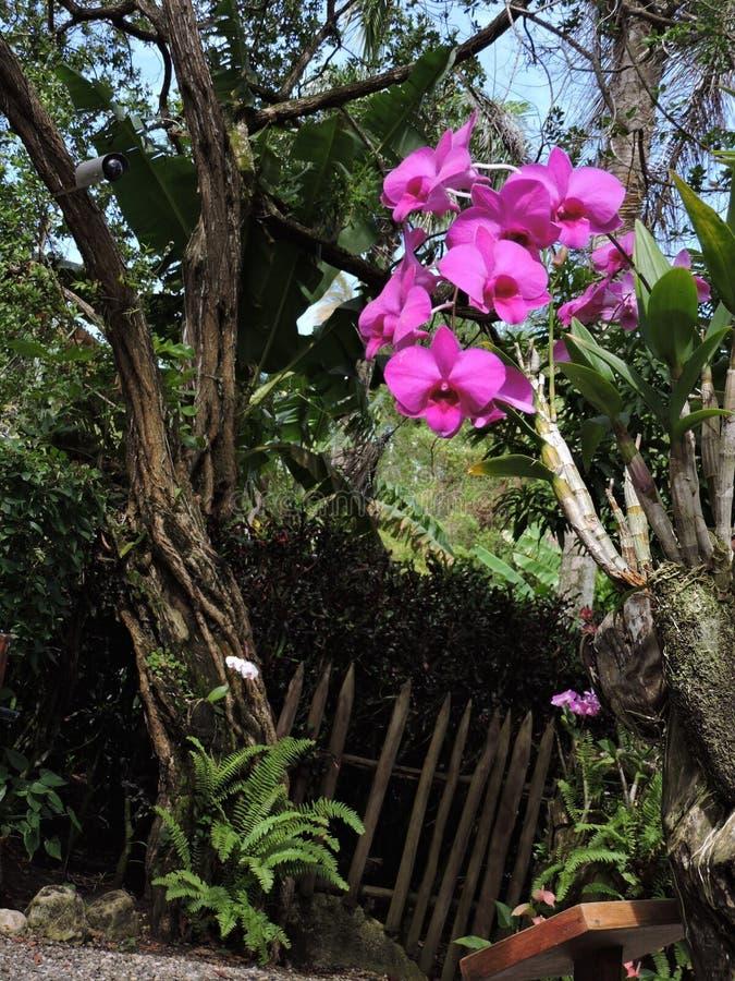 Rosa Orchideenblume stockbilder