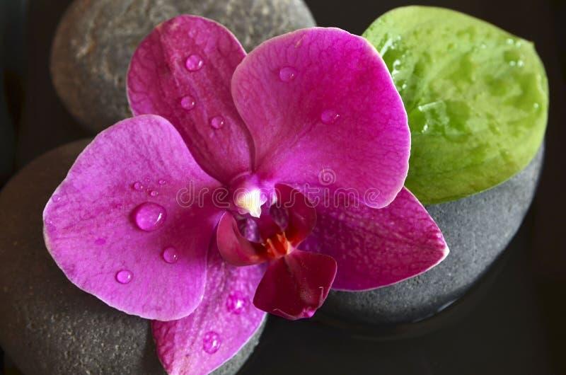 Rosa Orchideenblume auf Zensteinen mit Wassertropfen Phalaenopsis auf einem schwarzen Hintergrund Badekurort-, Aromatherapie- ode stockfotos