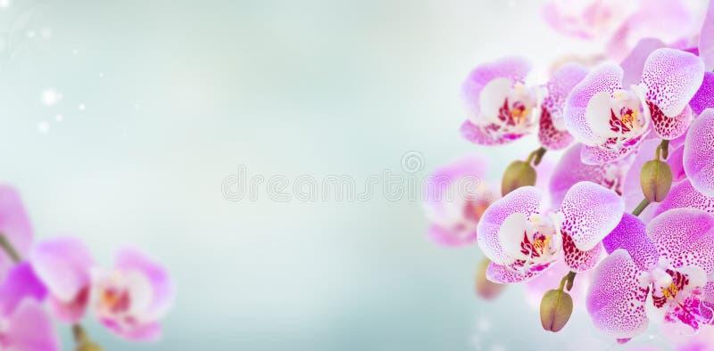 Rosa Orchideenniederlassungsabschluß oben stockbild