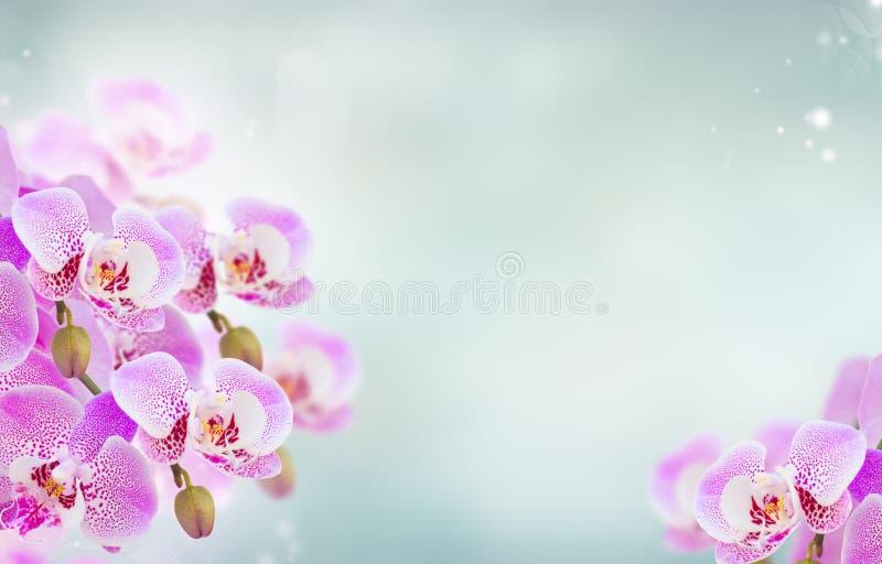 Rosa Orchideenniederlassungsabschluß oben lizenzfreies stockbild