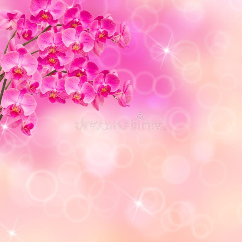 Rosa Orchideenzweige stockbild