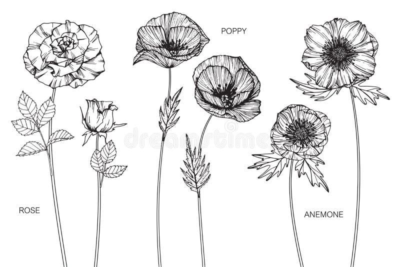 Rosa, papavero, disegno del fiore dell'anemone e schizzo illustrazione di stock