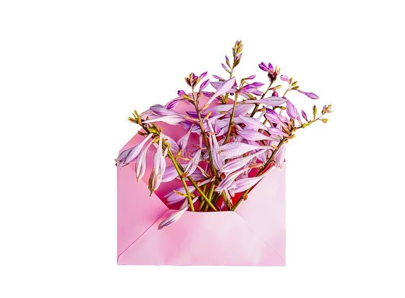 Rosa Papierumschlag mit frischem purpurrotem Garten blüht auf weißem Hintergrund Festliche Blumenschablone Gruß-Karten-Design Bes lizenzfreies stockfoto