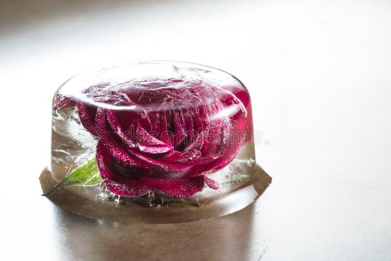 Rosa pequena do vermelho congelada em um bloco de gelo fotos de stock royalty free