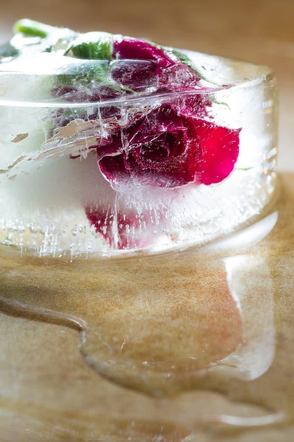 Rosa pequena do vermelho congelada em um bloco de gelo imagem de stock