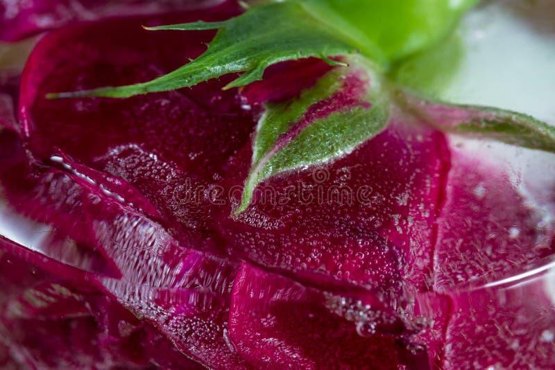 Rosa pequena do vermelho congelada em um bloco de gelo foto de stock royalty free