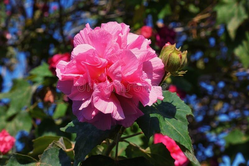 Rosa Perlenblumen auf grünem Grund stockbilder
