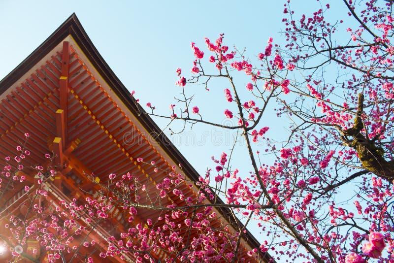 Rosa persikablomning med traditionell byggnad royaltyfria foton