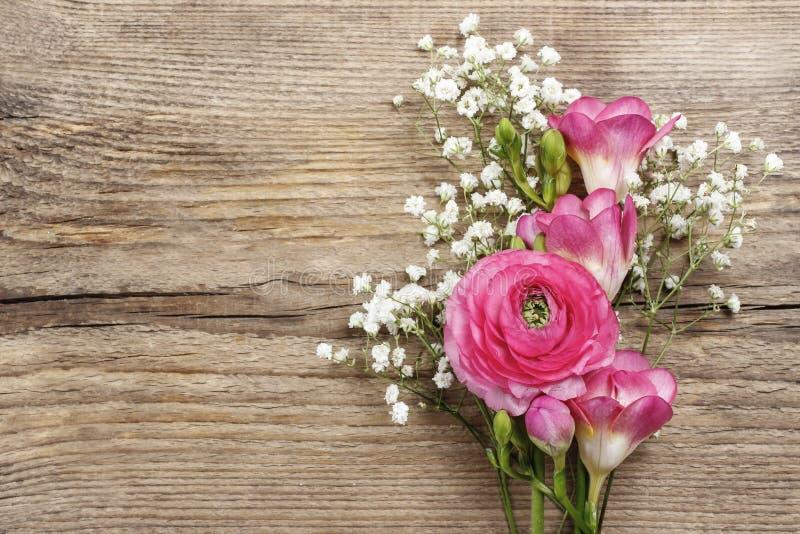 Rosa persisk smörblommablomma, freesiablomma arkivfoto