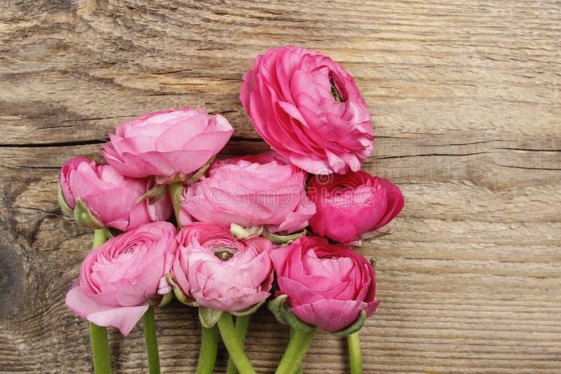 Rosa persisk smörblommablomma (ranunculusen) arkivfoton