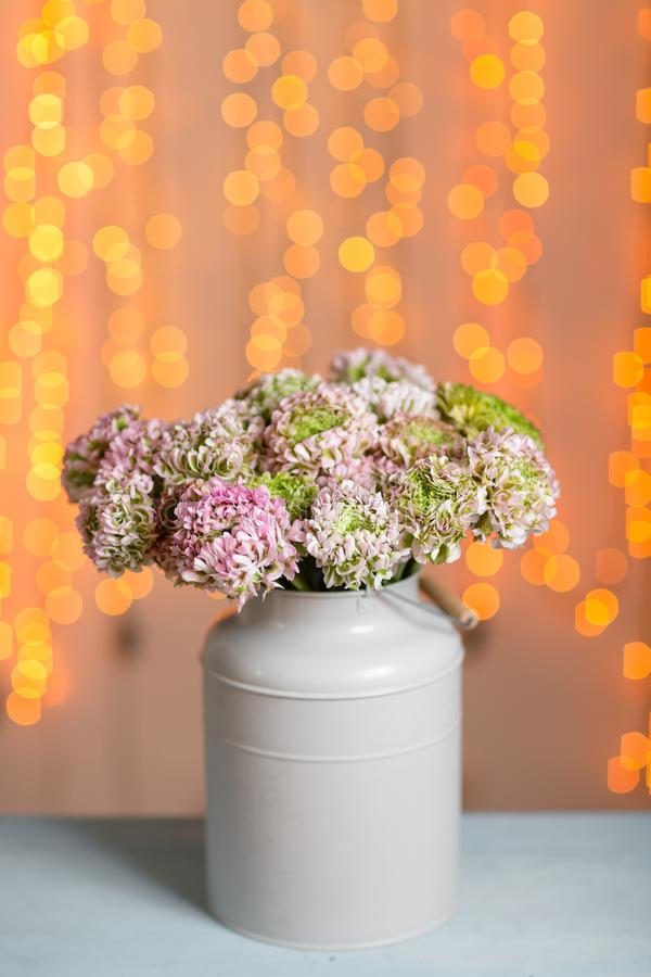 Rosa persiska smörblommablommor Den lockiga pionranunculusen i metallisk grå tappning kan Vas med den härliga buketten på fotografering för bildbyråer