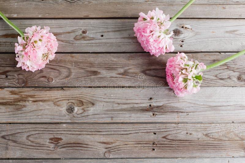 Rosa persiska smörblommablommor Lockig pionranunculus på trätabellen, kopieringsutrymme royaltyfri foto