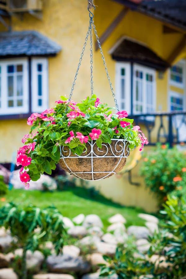 Rosa petuniablomma fotografering för bildbyråer