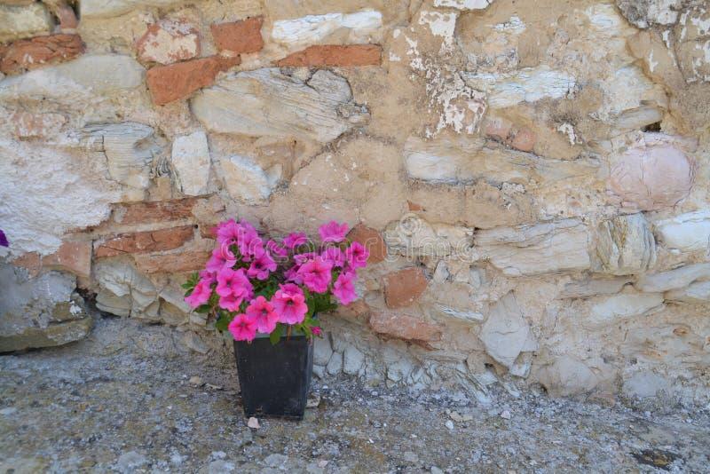 Rosa Petunien vor der Natursteinwand stockfoto
