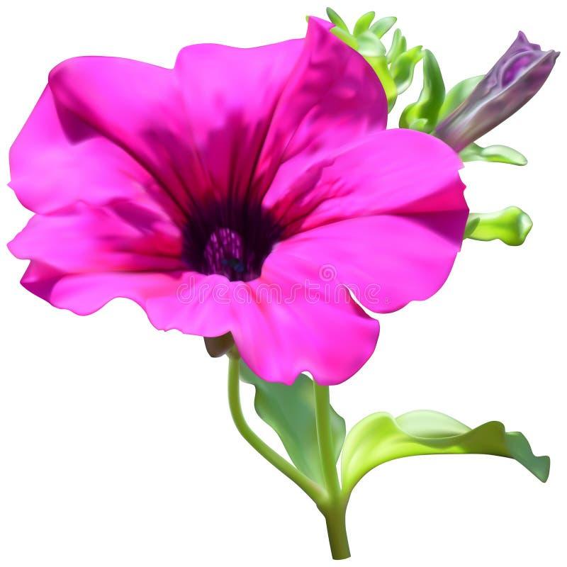 Rosa Petunienblume vektor abbildung