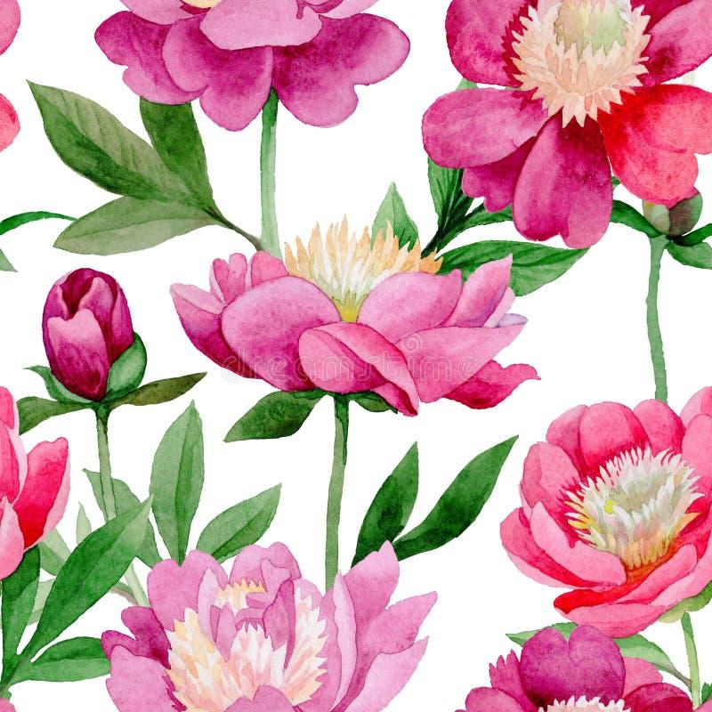 Rosa Pfingstrose Botanische mit Blumenblume Wildes Sommerblatt Wildflowermuster stock abbildung