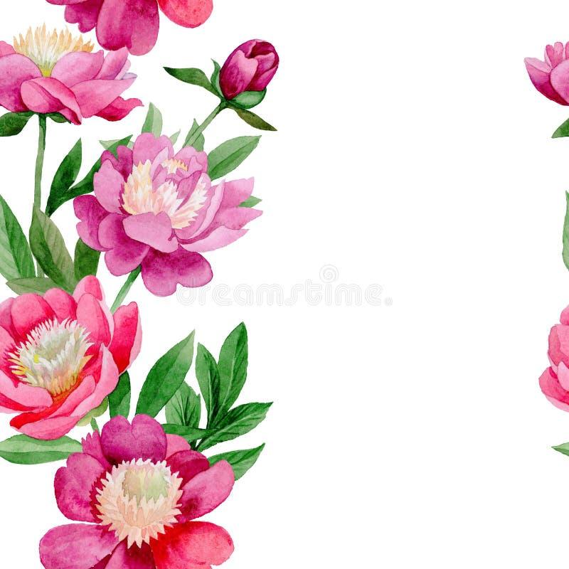 Rosa Pfingstrose Botanische mit Blumenblume Wildes Sommerblatt Wildflowermuster vektor abbildung