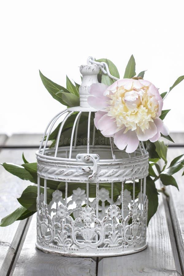 Rosa Pfingstrose im Weidenkorb auf rustikalem Holztisch stockbild