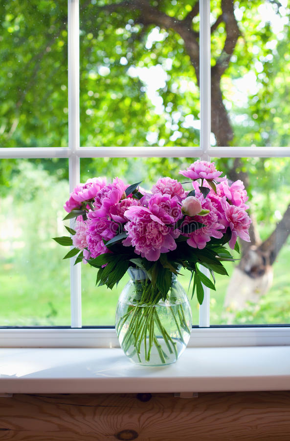 Rosa Pfingstrosen auf Fensterbrett lizenzfreies stockfoto