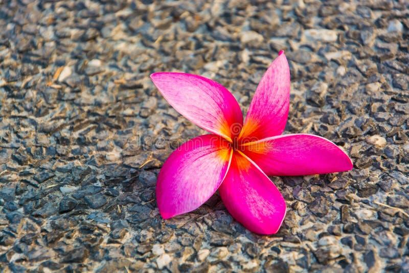 Rosa Pflaumenblumen auf dem Boden lizenzfreie stockbilder