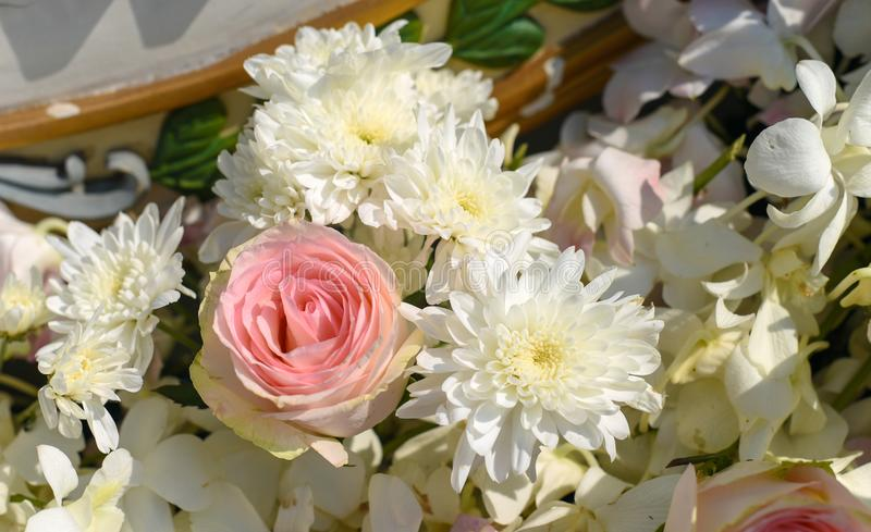 Rosa rosa piacevole con il fiore bianco fotografia stock libera da diritti