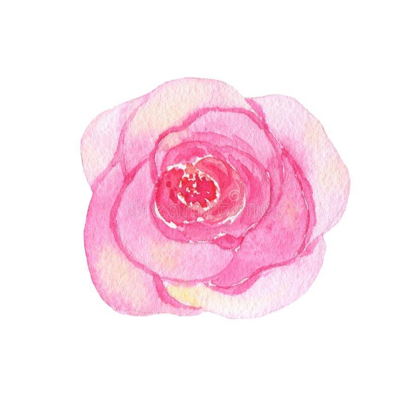 Rosa pintada a mano del rosa de la flor de la acuarela aislada en el fondo blanco libre illustration