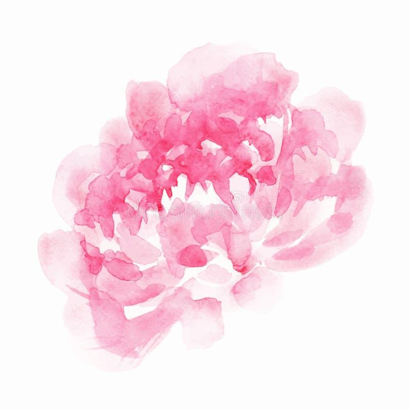 Rosa pion vektor illustrationer
