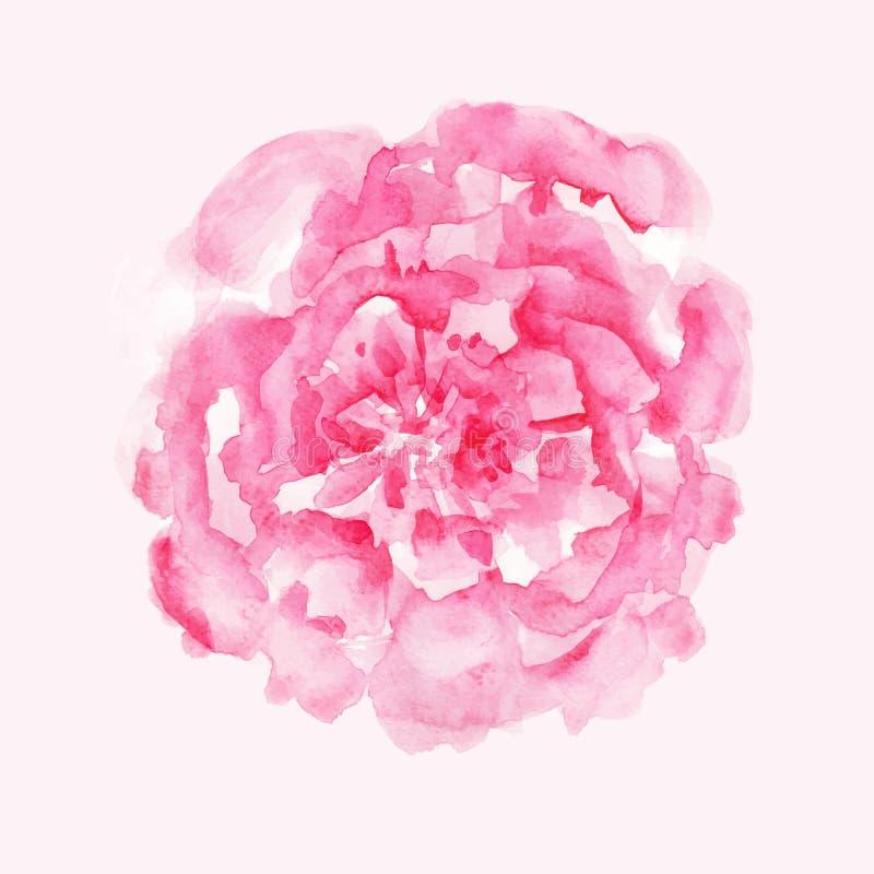 Rosa pion stock illustrationer