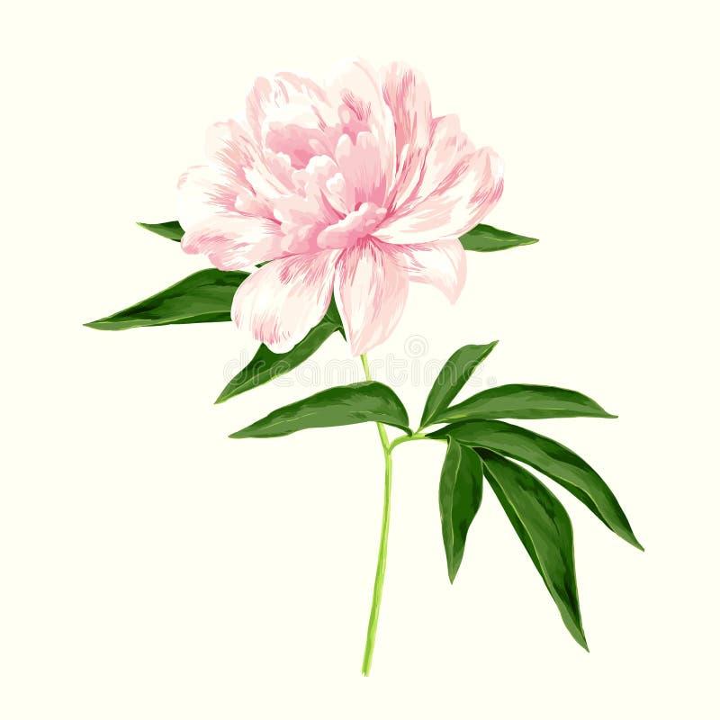 Rosa pion royaltyfri illustrationer