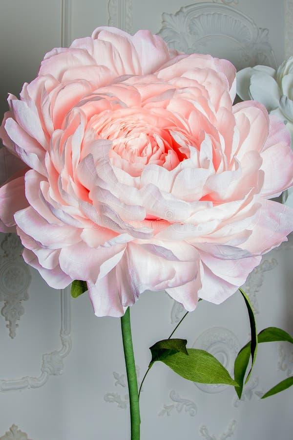 Rosa pionbakgrund, mycket closeup i höjdpunkttangent arkivfoto