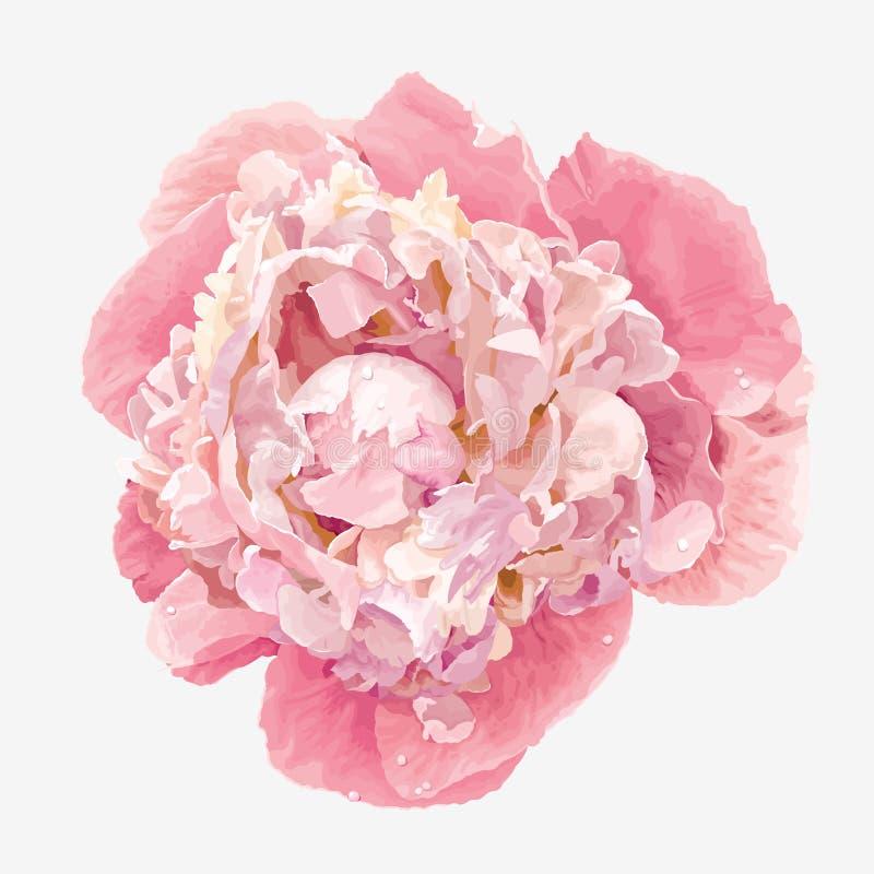 Rosa pionblomma royaltyfri illustrationer