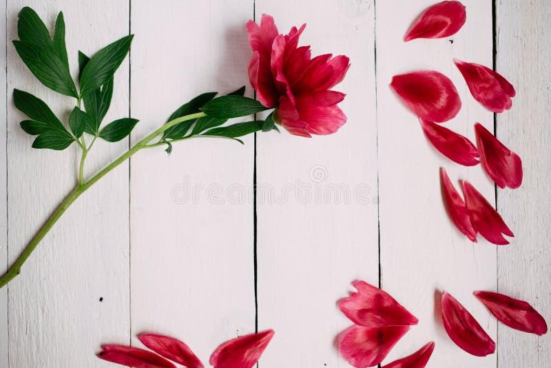 rosa pionblomma och sidor på vit träbakgrund arkivfoto