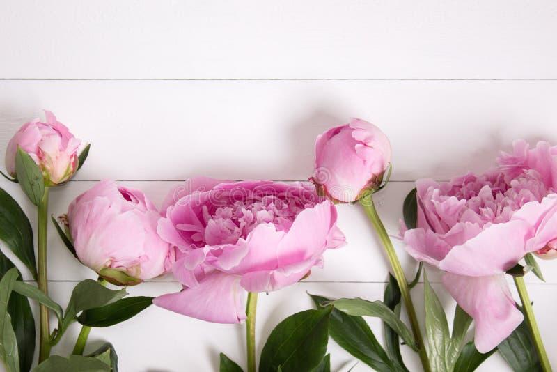 Rosa pioner blommar på vit lantlig träbakgrund med tomt utrymme för text Modell bästa sikt arkivbilder