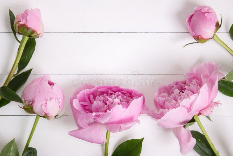 Rosa pioner blommar på vit lantlig träbakgrund med tomt utrymme för text Modell bästa sikt royaltyfria bilder