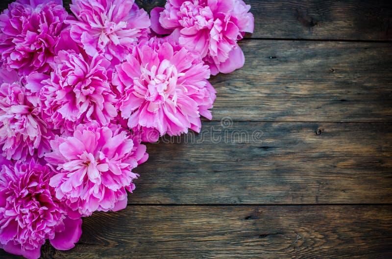 Rosa pioner blommar på wood bakgrund Ställe för text, bästa sikt arkivbild