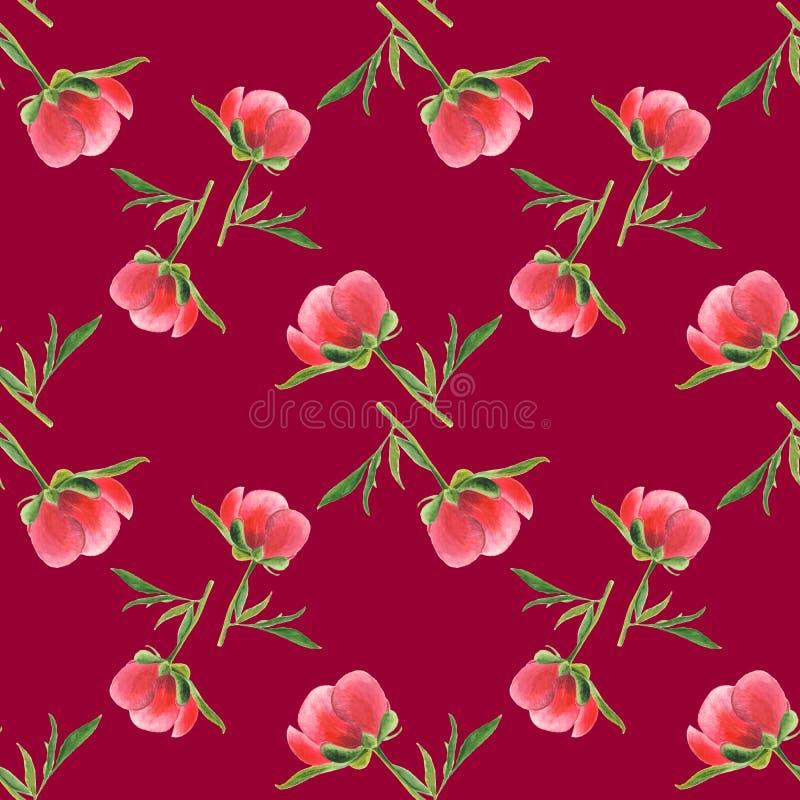 Rosa pionknopp på vinous bakgrund Sömlös vattenfärgmodell arkivbilder