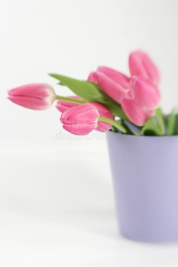 rosa purpur tulpanvase fotografering för bildbyråer