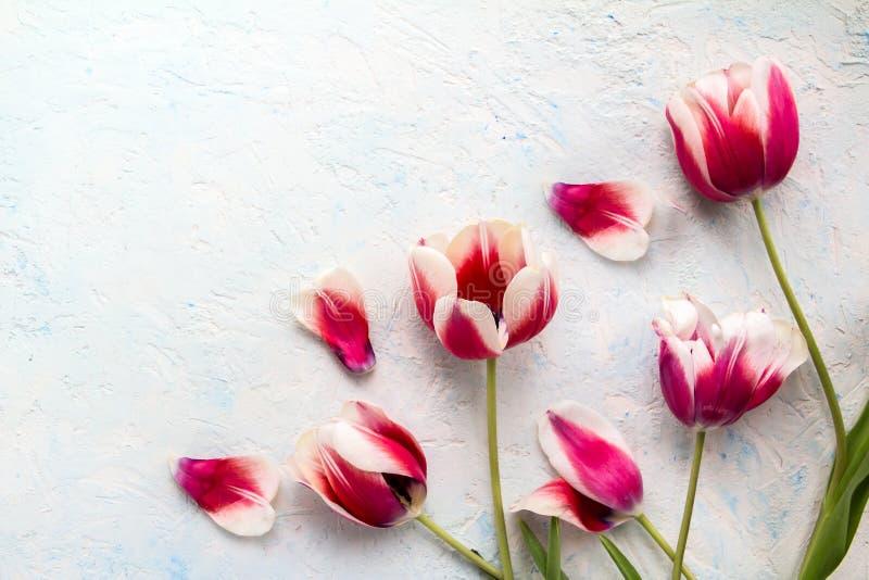 Rosa röda tulpan över trätabellen arkivbild