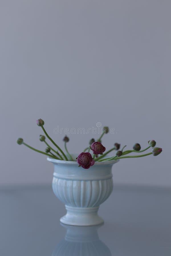 Rosa ranunculusblomma i keramisk vas arkivbilder