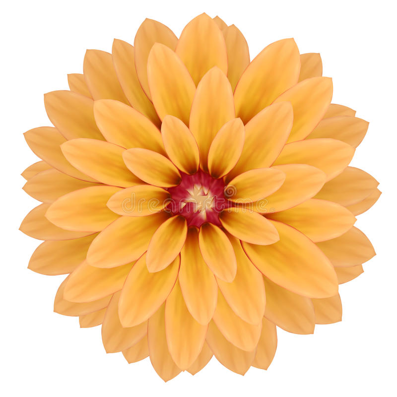 Rosa realistische Chrysanthemenblume vektor abbildung