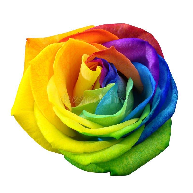 Rosa regnbåge eller lycklig blomma som isoleras av den snabba banan arkivbild
