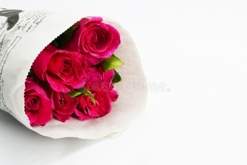 rosa ro fotografering för bildbyråer