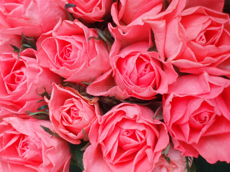 Download Rosa ro för grupp fotografering för bildbyråer. Bild av förbindelse - 281195