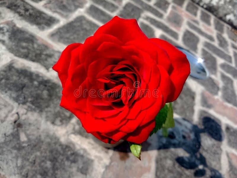 Rosa roja en el fondo texturizado ladrillo wallpaper fotos de archivo